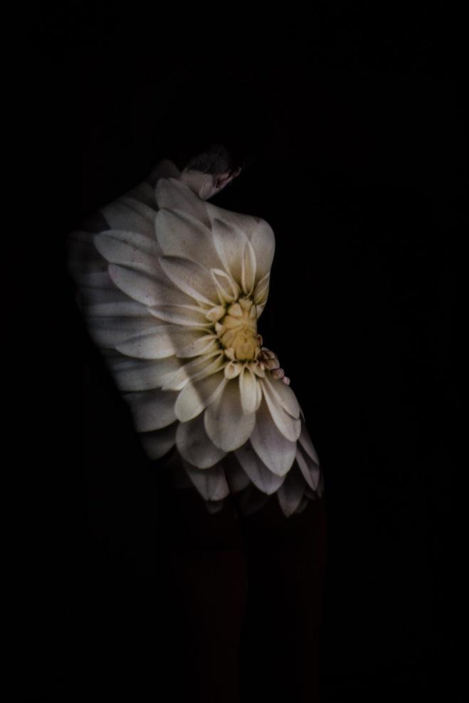 flower2-162