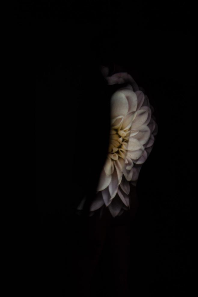 flower2-167